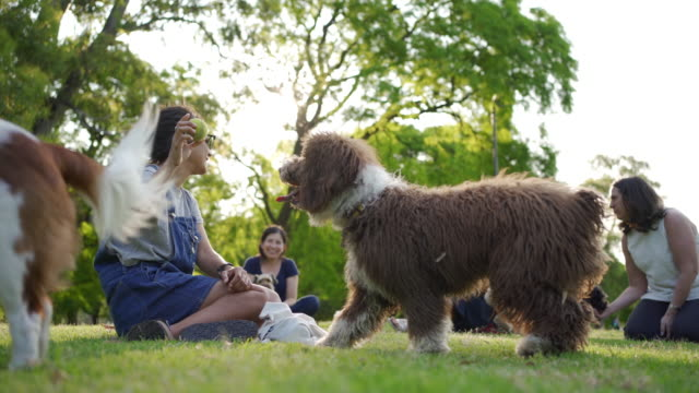 women and dogs enjoying day in the park - pet owner stock videos & royalty-free footage