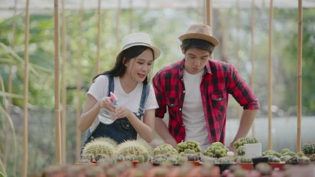 kvinnor och män av asiatisk härkomst, i åldern 20-30 år, vattnar kaktusväxter i avelsbyggnader. - beskära bildbanksvideor och videomaterial från bakom kulisserna