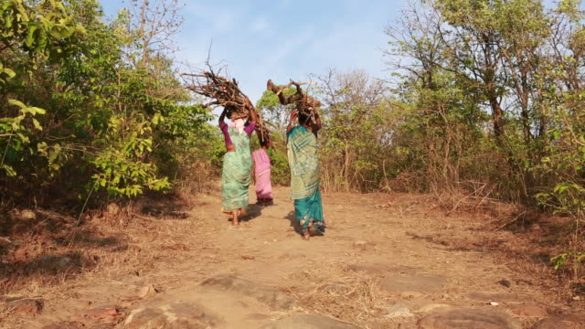 vídeos y material grabado en eventos de stock de women are carrying the collected firewood to the village. in many rural areas, there is no luxury like gas installation or transmission for cooking... - leña