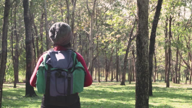 women are hiking and exploring the forest natural - trail ride stock videos and b-roll footage