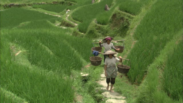 women carry heavy baskets on poles across shoulders as they climb path cut into hillside of dragon's backbone rice terraces, guilin, guangxi zhuang - rice paddy stock-videos und b-roll-filmmaterial