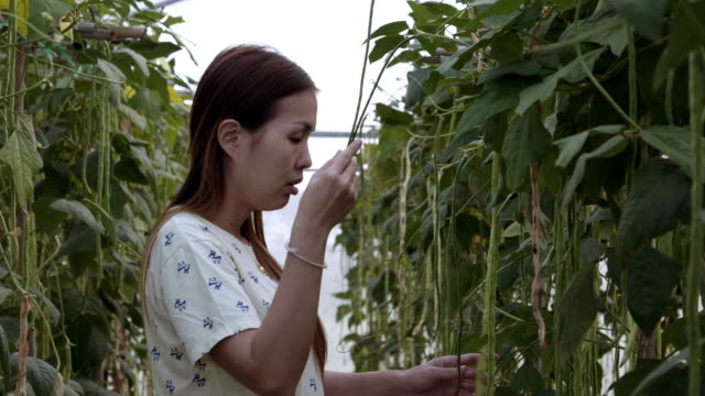 women checking plant in the greenhouse - raw food diet stock videos & royalty-free footage