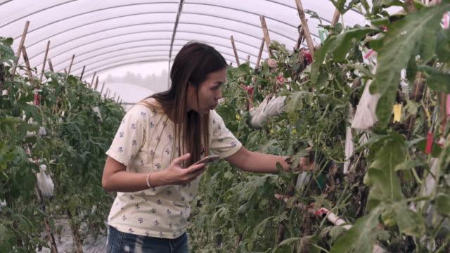 stockvideo's en b-roll-footage met vrouwen controleren plant in de kas - hobby's