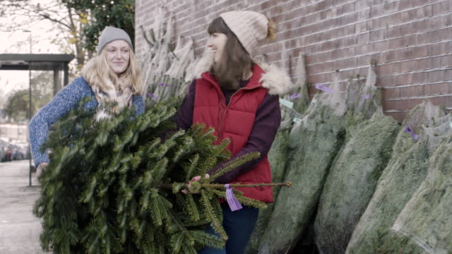 women choosing and picking up a christmas tree at christmas tree farm. - christmas tree stock videos & royalty-free footage