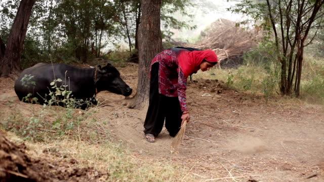 women cleaning animal farm - livestock stock videos & royalty-free footage