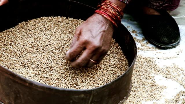vídeos y material grabado en eventos de stock de mujeres limpieza de trigo en casa - países en vías de desarrollo