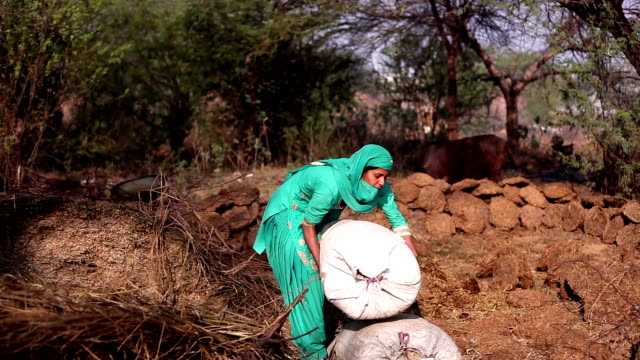 Women collecting silage for animal