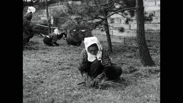 women cut grass using hand scythes in japan; 1964 - グランドキーパー点の映像素材/bロール