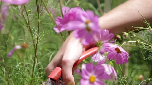 women cutting flowers close up