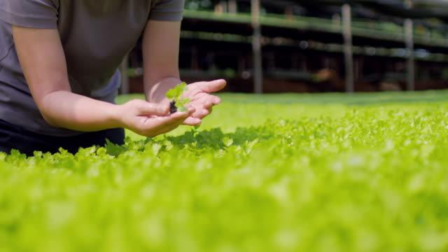 Agriculteur de femmes contrôle et vérification de légumes organiques à effet de serre