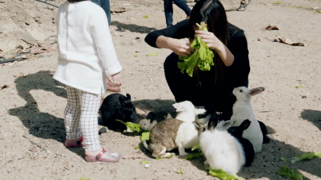women feeding cute fluffy light brown and white baby bunny - black hairy women stock videos & royalty-free footage