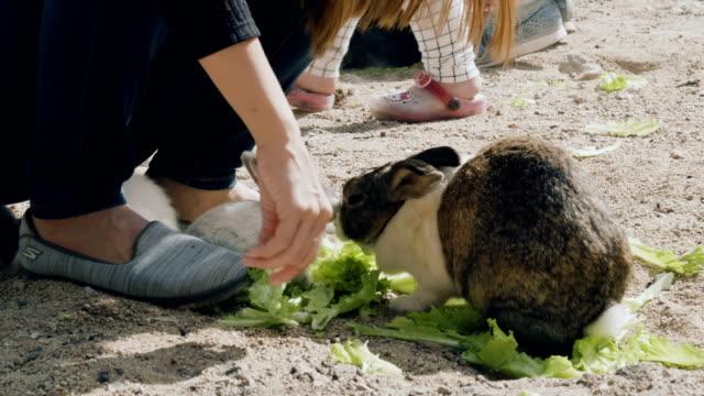 stockvideo's en b-roll-footage met vrouwen voeden schattige pluizige lichte bruine en witte baby konijntje - cottontail