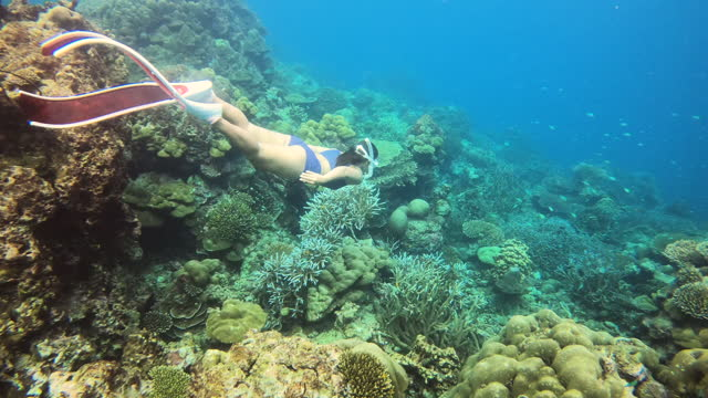 women free diving around coral reef undersea - free diving stock videos & royalty-free footage