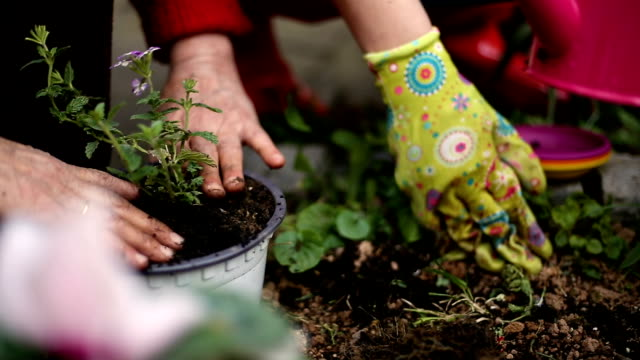 women gardening in backyard on a sunny spring day - low to ground, soft focus - giardinaggio video stock e b–roll