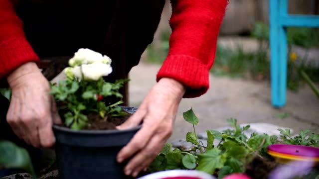 vídeos de stock e filmes b-roll de women gardening in backyard on a sunny spring day - low to ground, soft focus - soft focus