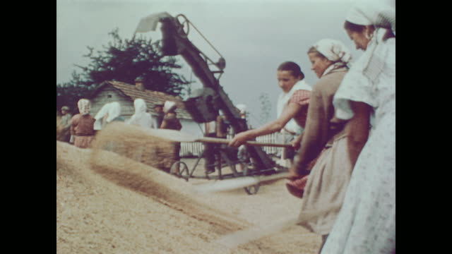 1959 women gather grain and men separate wheat from chaff on kiev state farm - ukraine stock-videos und b-roll-filmmaterial