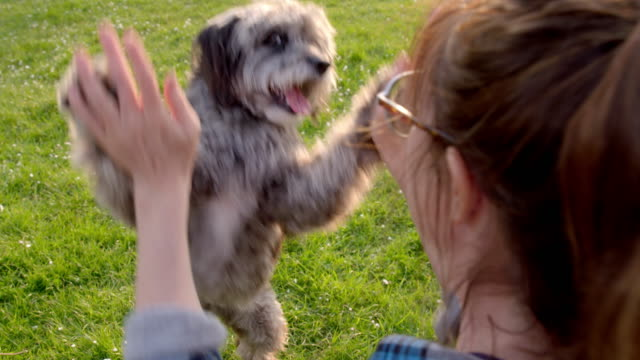 SLO MO women giving high fives to Terrier in park