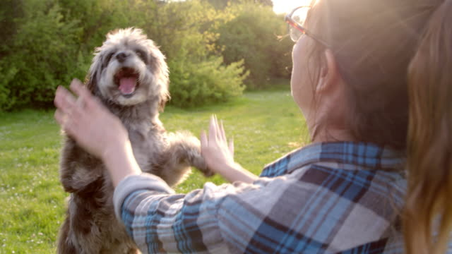 vídeos de stock, filmes e b-roll de slo mo women giving high fives to terrier in park - high five