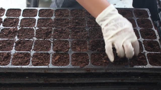 Women hand are preparing peat moss soil.