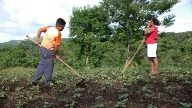 women hoe the land in nicaragua. - nicaragua stock videos and b-roll footage