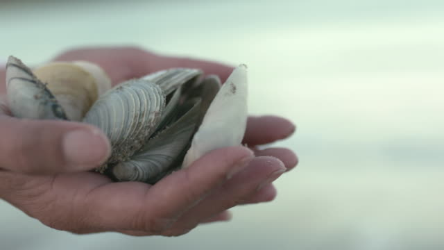 women holding a cupped handful of collected sea shells on beach at twilight dusk - seashell stock videos and b-roll footage