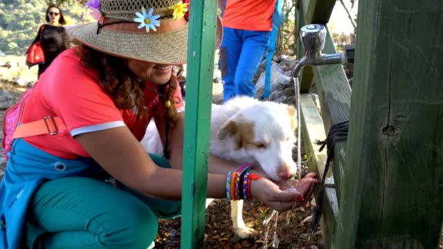 vídeos de stock, filmes e b-roll de uma mulher está a dar água ao cão de suas mãos. - sedento
