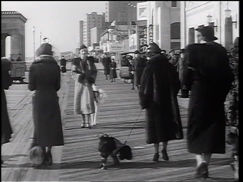 b/w 1937 rear view women on boardwalk picking up dogs by luggage straps on backs / newsreel - 1937 stock videos and b-roll footage