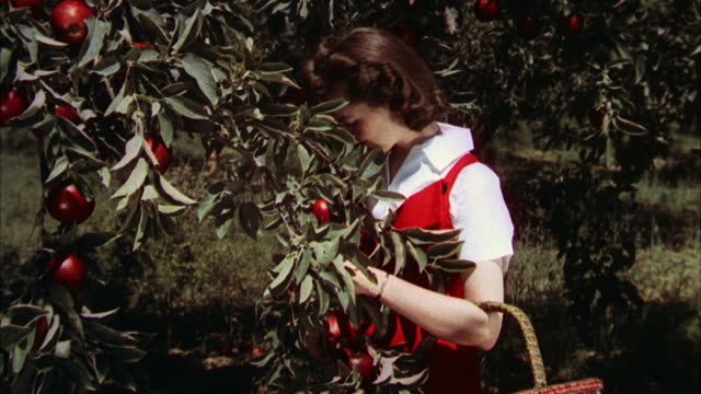 ms women picking up apple - 1960 stock videos & royalty-free footage