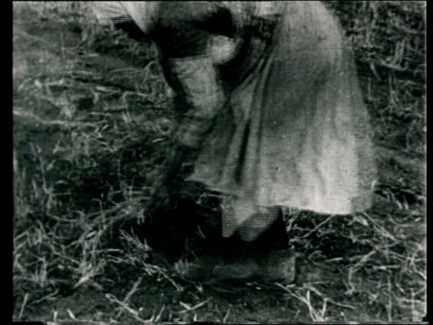 1920 montage b/w women picking up roots in field/ russia - russia stock videos & royalty-free footage