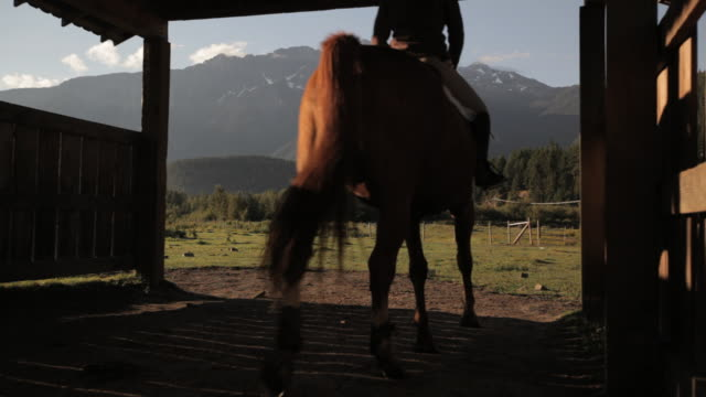 vídeos de stock, filmes e b-roll de women rides horse out of  barn  - animal de trabalho