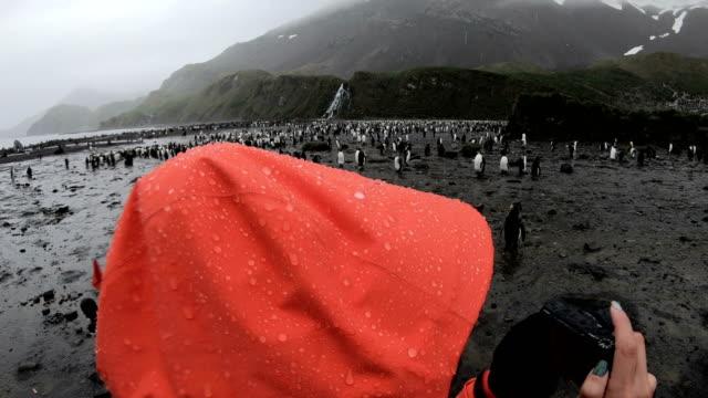 women shoot penguins in south georgia - argentina video stock e b–roll