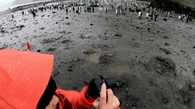vidéos et rushes de femmes tirer pingouins en géorgie du sud - oiseau qui ne vole pas