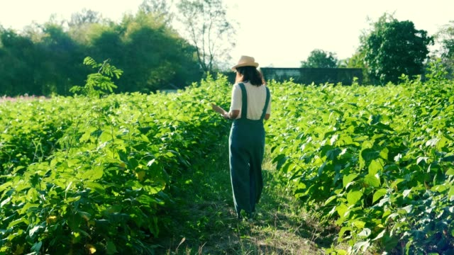 women smart farmer - agricultural activity stock videos & royalty-free footage