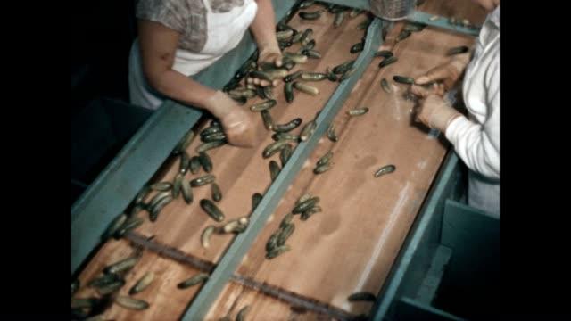 vidéos et rushes de women sort cucumbers for pickling. - chaîne de production