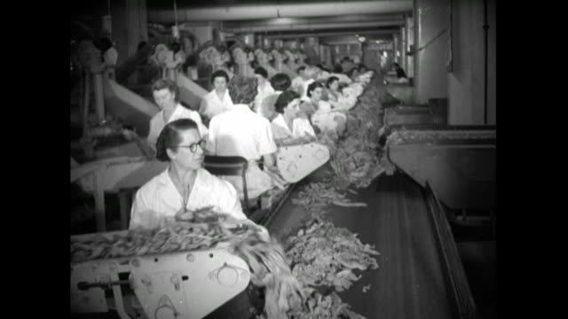 women sort tobacco leaves in cigarette factory; 1951 - cigarette stock videos & royalty-free footage
