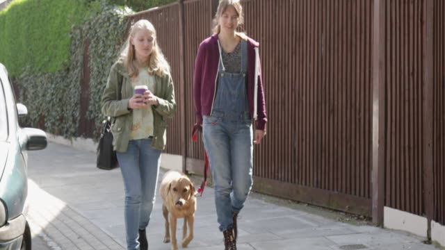 WS of women talking, walking with labrador dog in urban street.