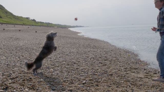SLO MO women teaching Terrier to catch ball on beach