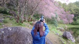 women traveler use camera take a photo cherry blossoms or sakura