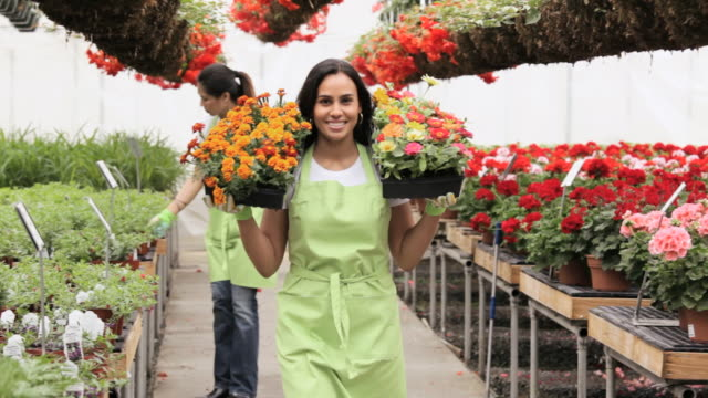 ms pan women walking in floral business  / richmond, virginia,united states - florist stock videos & royalty-free footage