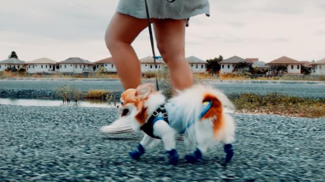 vídeos de stock e filmes b-roll de women walking with her dog- steadicam shot - cão miniatura