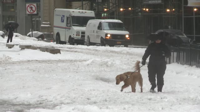 women walks dog on leash in lower manhattan at the tail end of a snow storm - 犬の綱点の映像素材/bロール