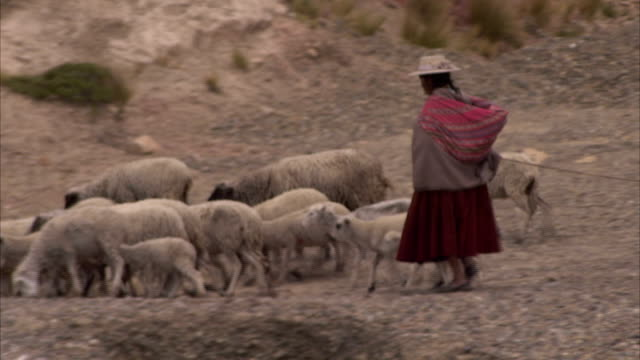 a women walks with her livestock in the bolivian mountains. available in hd. - 農林水産関係の職業点の映像素材/bロール