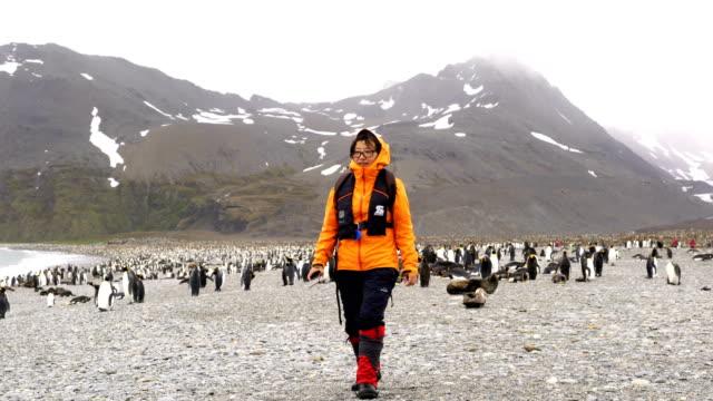women watch fur seals on salisbury plain, south georgia - polar climate stock videos and b-roll footage