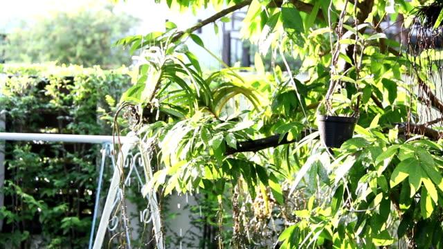 vídeos de stock, filmes e b-roll de mulheres molhando com árvore no jardim casa - regando