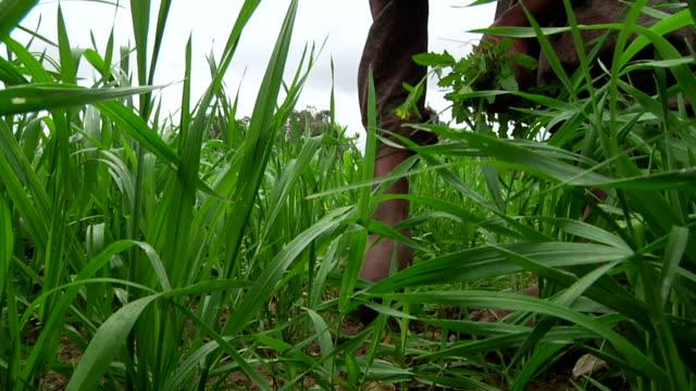 women weeding crops - weeding stock videos & royalty-free footage