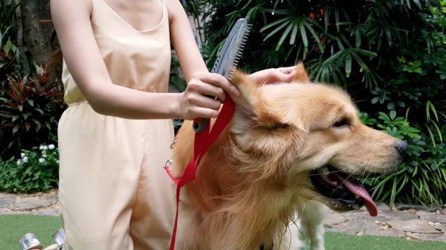 Women With Dog