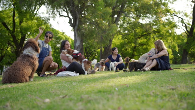 women with dogs at public park - pet owner stock videos & royalty-free footage