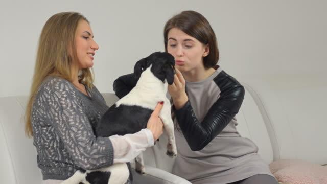 vídeos de stock, filmes e b-roll de mulheres com seus cães sentado no sofá - terrier