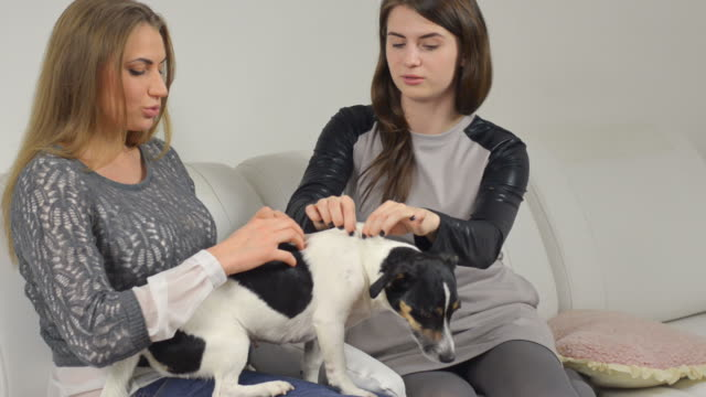 Women with their dogs sitting on sofa