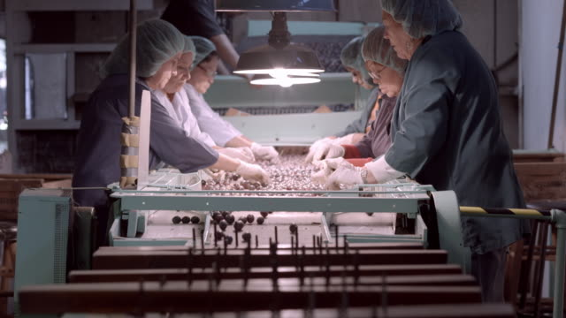 women workers in protective clothing at olive sorting conveyor belt during the process of grading olives by hand / ontario, california, usa - food processing plant stock videos & royalty-free footage